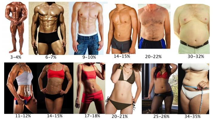 body-fat-percentage-levels