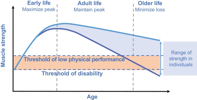 Muscle loss with aging